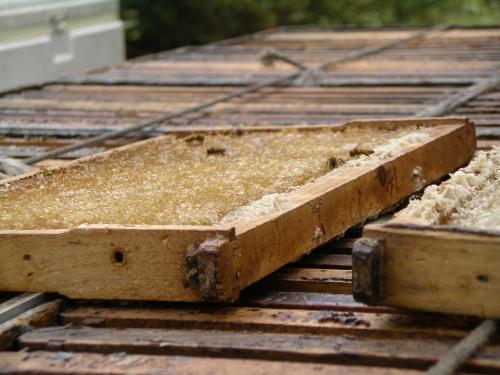 Harvesting Tupelo Honey in Florida Panhandle
