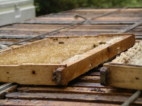 Harvesting Tupelo Honey in Florida Panhandle