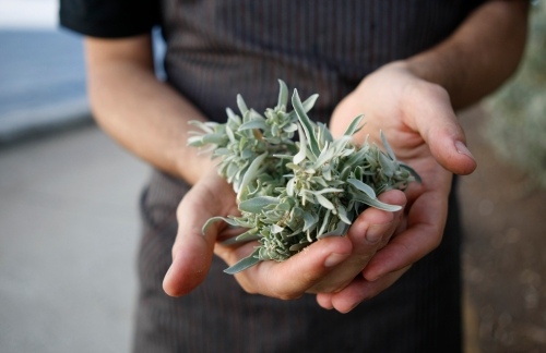 Exec chef Ben Shewry of Attica forages for saltbush. Photo Love: Colin Page